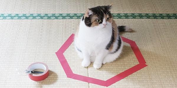 gatto cerchio