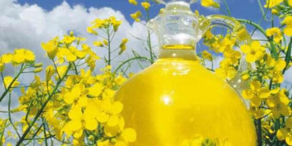 olio di colza