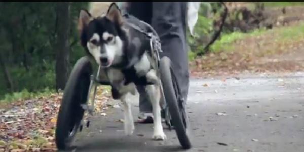 protesi dog