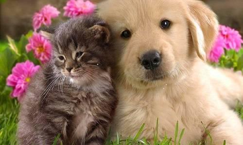 b2ap3_thumbnail_assicurare-cani-e-gatti.jpg
