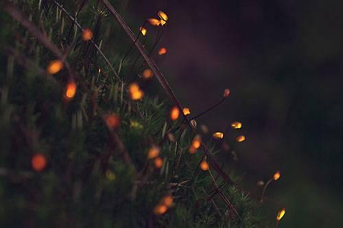 b2ap3_thumbnail_bioluminescent-forest.jpg