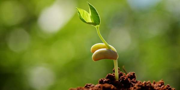 agricoltura biodinamica frane
