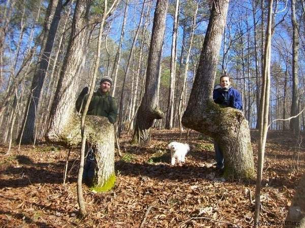 alberi nativi 2