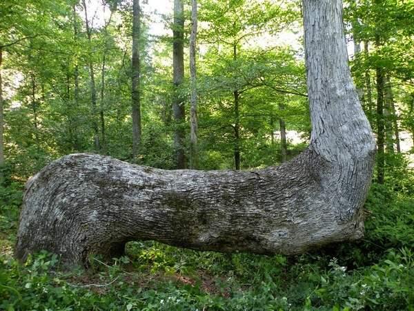 alberi nativi 3