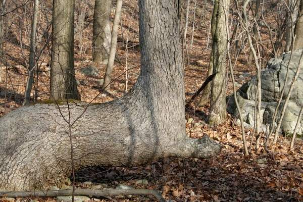 alberi nativi 4