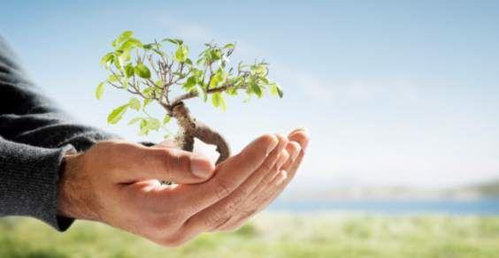 piantare alberi co2