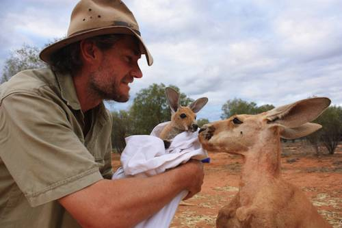 b2ap3_thumbnail_Chris-Barnes-Kangaroo-Sanctuary-canguri-orfani-Australia-00.jpg