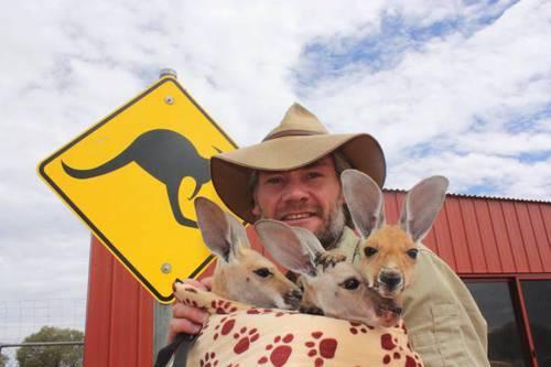 b2ap3_thumbnail_Chris-Barnes-Kangaroo-Sanctuary-canguri-orfani-Australia-09.jpg