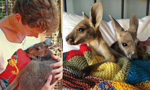 b2ap3_thumbnail_Chris-Barnes-Kangaroo-Sanctuary-canguri-orfani-Australia-15.jpg