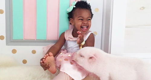 b2ap3_thumbnail_little-girl-and-her-piglet-instagram-1426003327-large-article-0.png