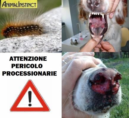 b2ap3_thumbnail_processionaria_20150312-102049_1.jpg