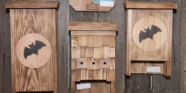 costruire bat box
