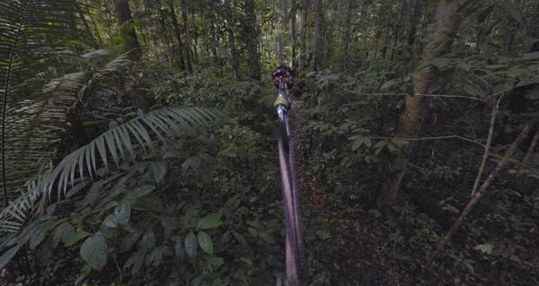 foresta2trekker