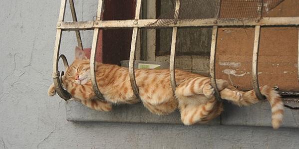 funny-sleeping
