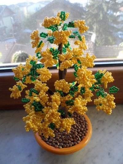 mimosa fai da te 4 bonsai