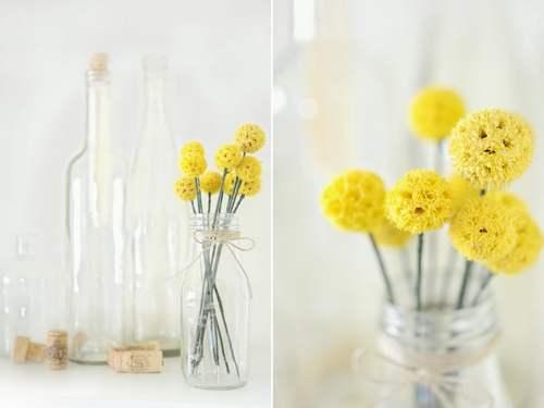 mimosa fai da te 5 vaso