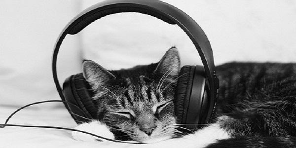 musica gatti