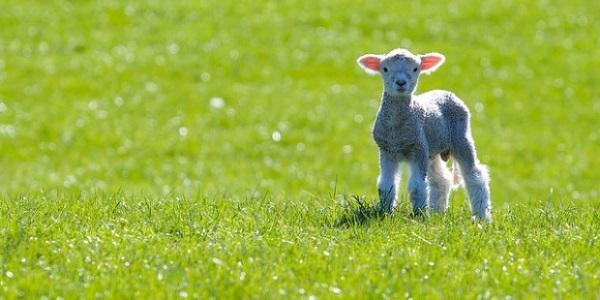 Pasqua cruelty free