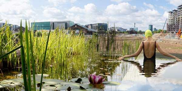piscina piante cover