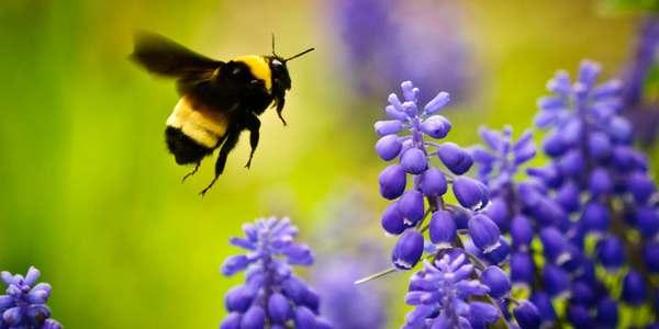 api neonicotinoidi dipendenza
