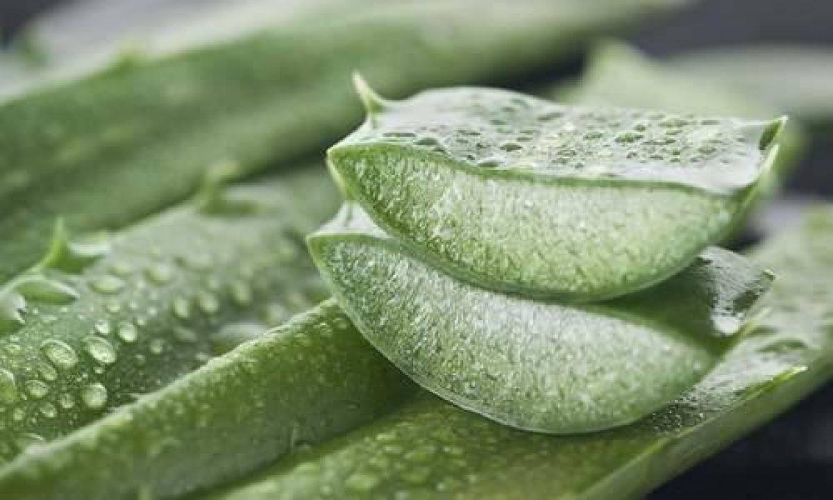 Aloe In Giardino aloe vera: 10 ottimi motivi per coltivarla in vaso o in