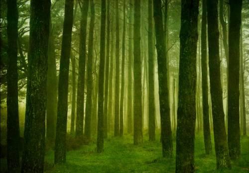 b2ap3_thumbnail_trees-forest.jpg
