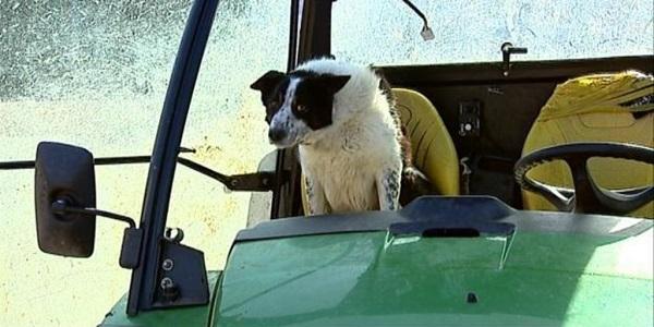 cane trattore