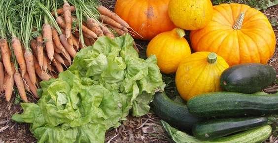 come coltivare orto naturale biologico