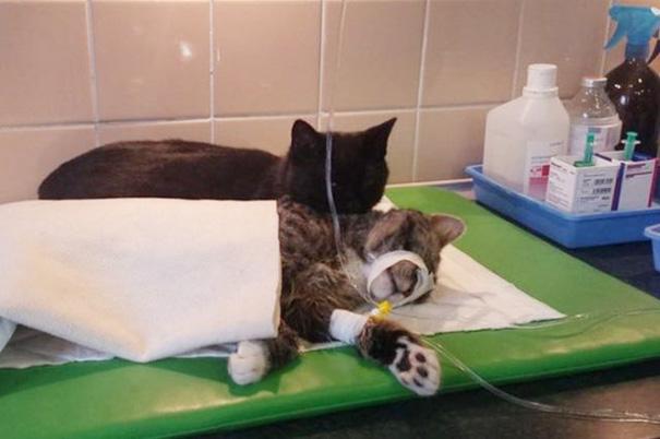 gatto infermiere2