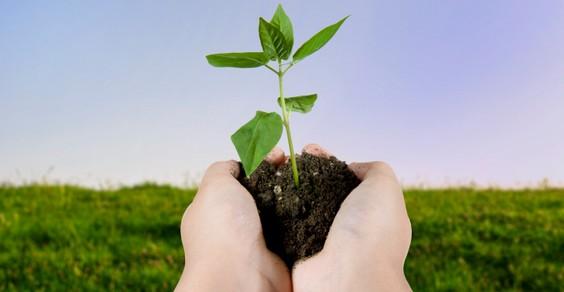agricoltura biologica nutrire il pianeta