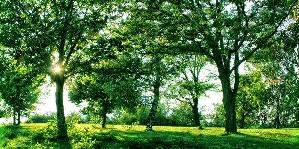 alberi200
