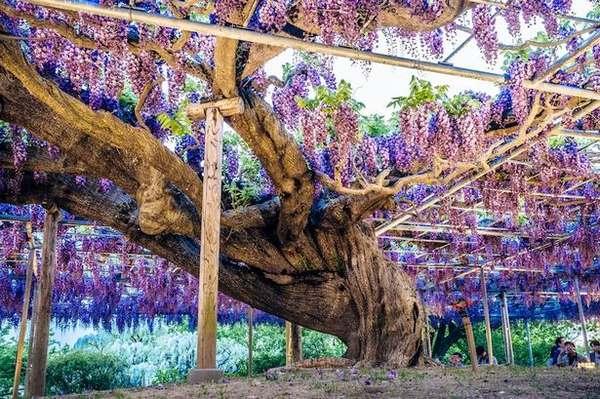 albero della vita 2