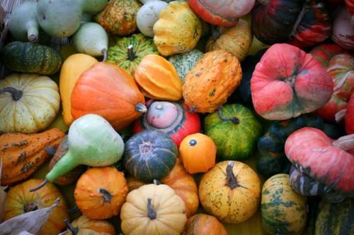 b2ap3_thumbnail_biodiversit_agricola.jpg