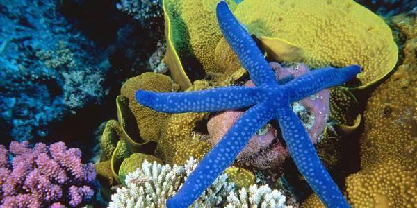 barriera corallina pericolo