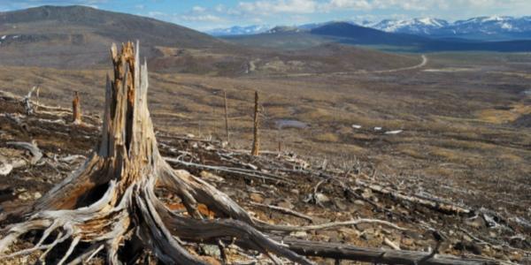 deforestazionedanni