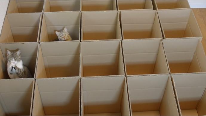 labirinto gatti