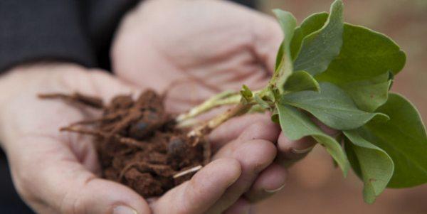 pesticidi tossici agricoltura greenpeace