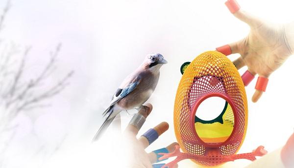 uccelli citta
