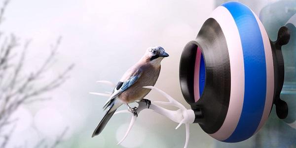 uccelli citta2