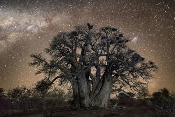 10. Stelle alberi