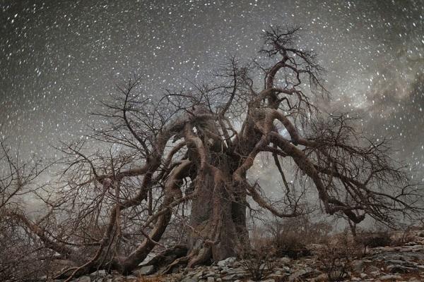 11. Stelle alberi