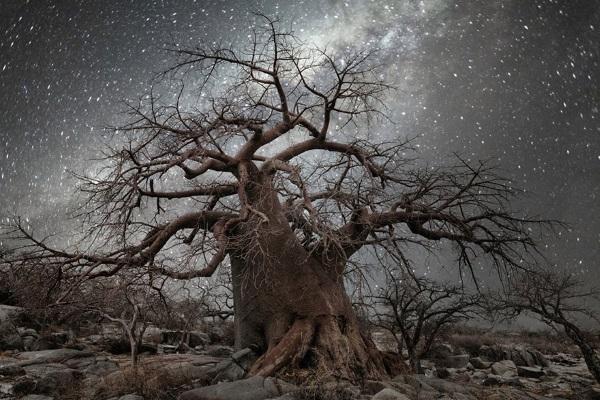 3. Stelle alberi
