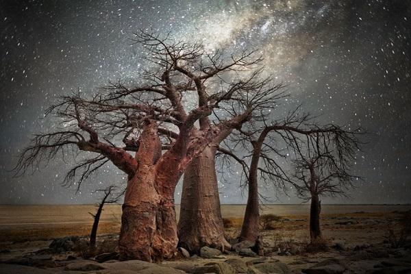7. Stelle alberi