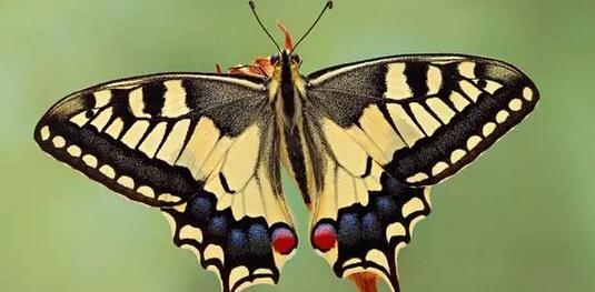 7. farfalle