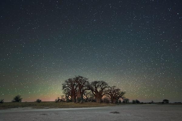 8. Stelle alberi