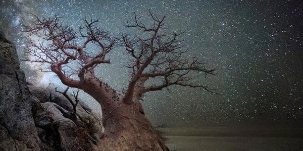 Cover stelle alberi