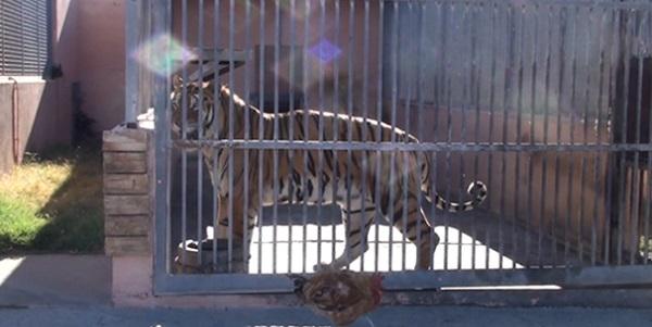 Dossier LAV Odry Zoo 2014 11 COVER