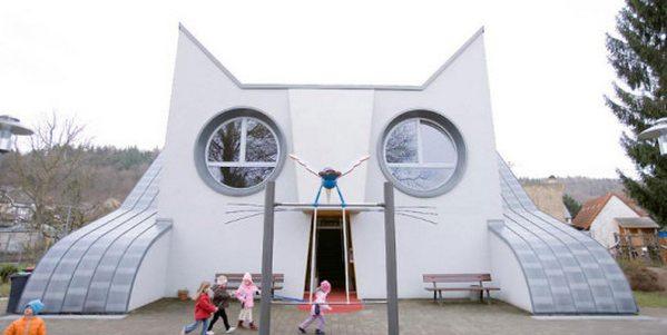 asilo gatto cover