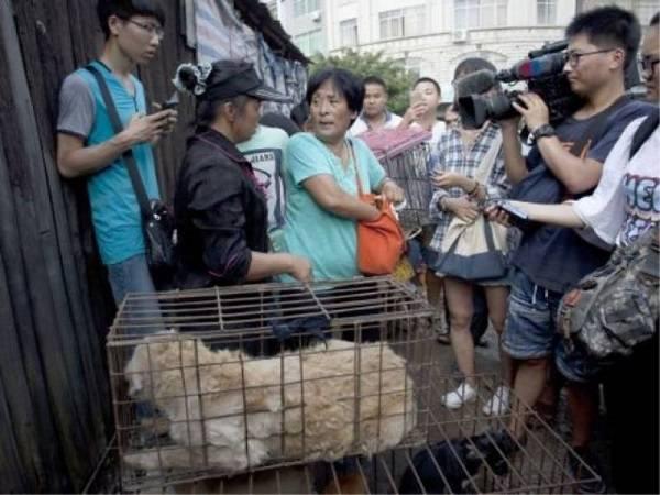 cani carne cinese2