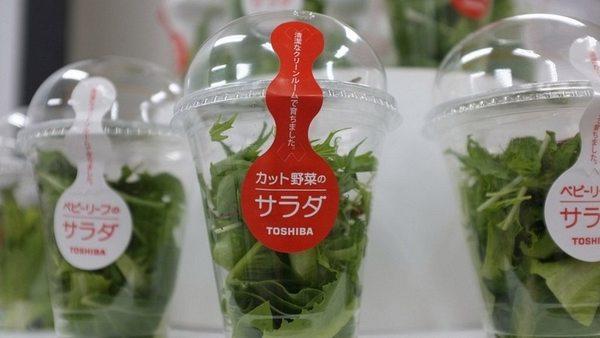 insalata idroponica 7